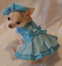 25+ best ideas about Dog outfits on Pinterest   Puppy ...