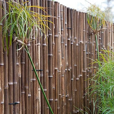 25 Best Ideas About Bamboo Screening On Pinterest Bamboo Garden