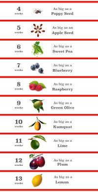 Fetal Development Chart Fruit
