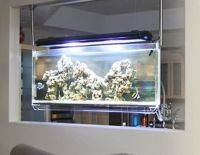 17 Best images about Aquarium Ideas on Pinterest ...