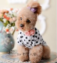 Teddy dog clothes spring and summer puppydom clothes pet ...