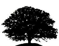 12 best images about trees on Pinterest   Trees, Black and ...