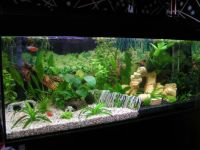 freshwater aquarium aquascape design ideas - Google Search ...