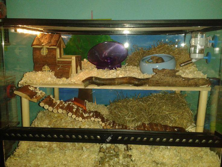 17 Best images about hamster terrarium on Pinterest  Cool