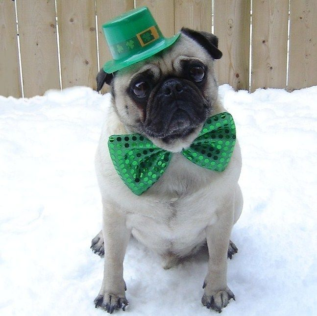 Cute Wallpaper St Pattys Day Pupppy 216 Best St Patrick S Day Pets Images On Pinterest