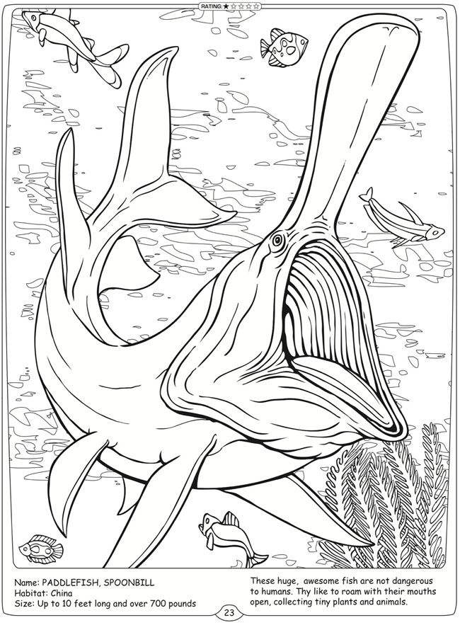 55 best images about Coloring Pages/LineArt Animals-Ocean