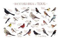 20+ best ideas about Bird Identification on Pinterest ...