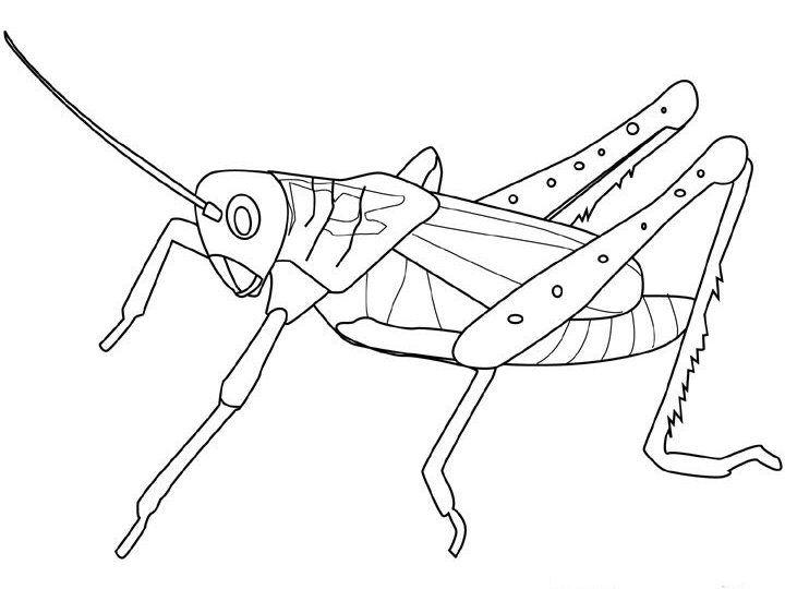 52 best images about Insekten Kleurplaten on Pinterest