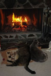 17+ best images about Hearth Cats on Pinterest | Warm ...