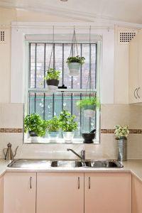 25+ best ideas about Window plants on Pinterest   Indoor ...
