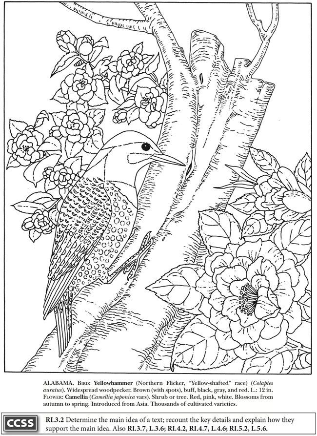 1000+ images about Stencils & Coloring Pages on Pinterest