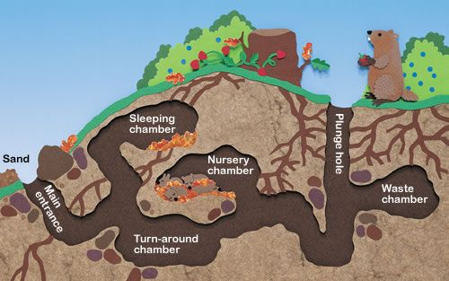 Rabbit Burrow Diagram Not Just A Hole In The Ground Articles