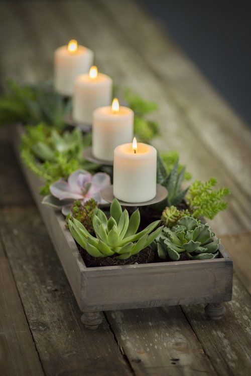 stylish notes on decor why succulents are the perfect houseplant