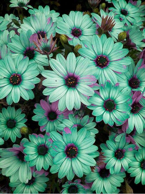 Purple and teal flowers  TEAL  PURPLE  Pinterest