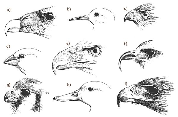 Answers To Beaks Of Finches Lab