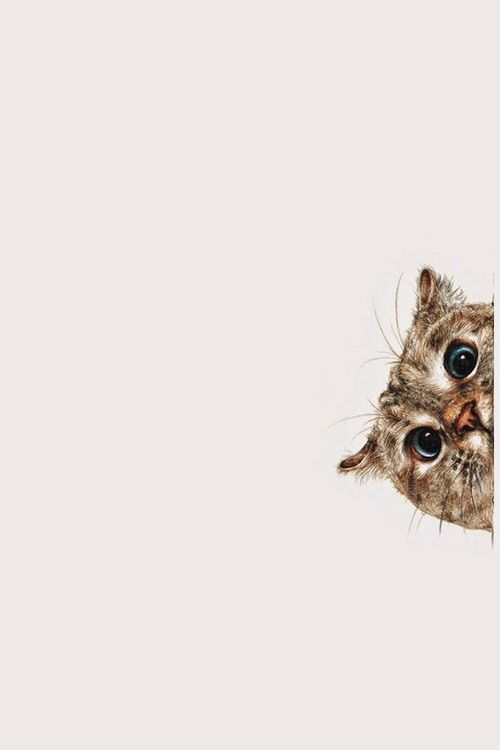 Cute Funny Wallpapers For Lazy Peopke We Heart It 経由の画像 Https Weheartit Com Entry 155776769