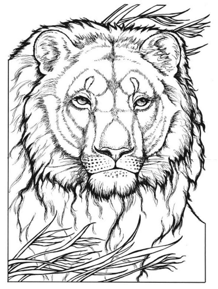 Cat Coloring Page Animals Town