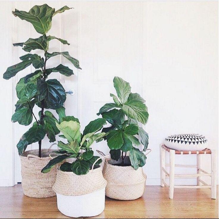 Best 25+ Indoor plant decor ideas on Pinterest