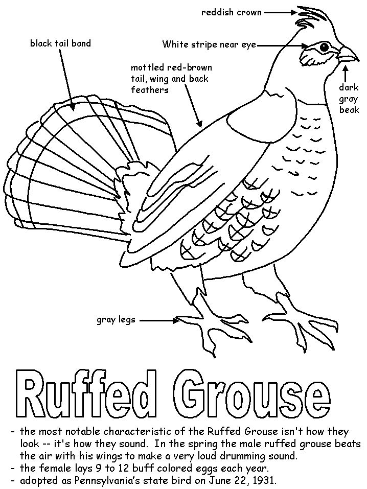 17 Best images about Ruffed Grouse on Pinterest