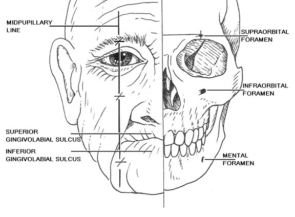 25+ best ideas about Facial nerve anatomy on Pinterest
