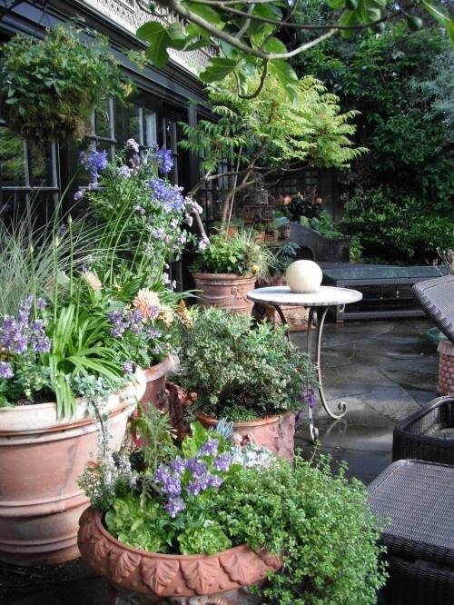63 Best Images About Mediterranean Garden On Pinterest Gardens