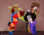 'extreme dog styling' sees poodles