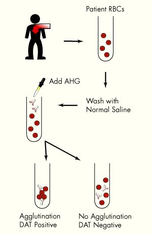 53 best images about Med Lab Science on Pinterest