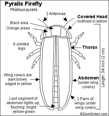 25+ Best Ideas about Lightning Bug Crafts on Pinterest