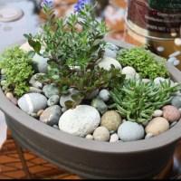 17 best Rock Gardens images on Pinterest