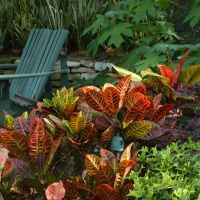 Best 25+ Tropical landscaping ideas only on Pinterest ...
