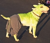 68 best images about DOGS COSTUMES on Pinterest | Pets ...