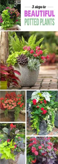 25+ best ideas about Outdoor potted plants on Pinterest ...
