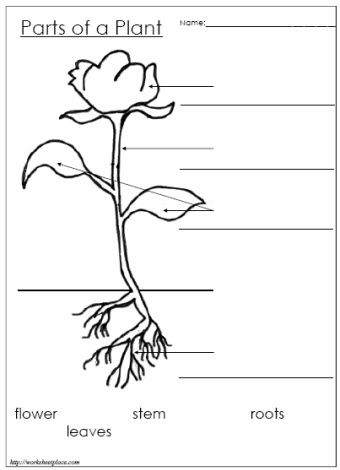 parts of a seed diagram worksheet international truck codes 1000+ ideas about plant on pinterest | life cycles, cycles and ...