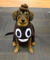 25+ Best Ideas about Dog Costumes For Kids on Pinterest ...
