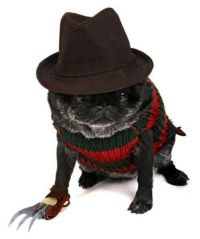 48 best images about Pug costume on Pinterest | What's the ...