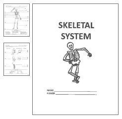 17 Best images about health/skeletal system etc on
