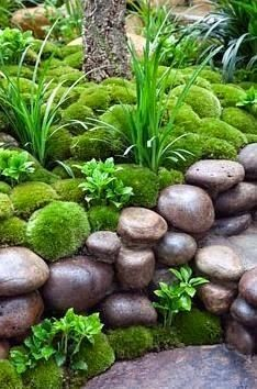 25 Best Ideas About Moss Garden On Pinterest Growing Moss