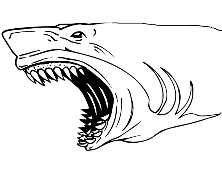 Best 25+ Shark jaws ideas on Pinterest