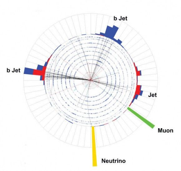 204 best images about Subatomic World, Standard Model