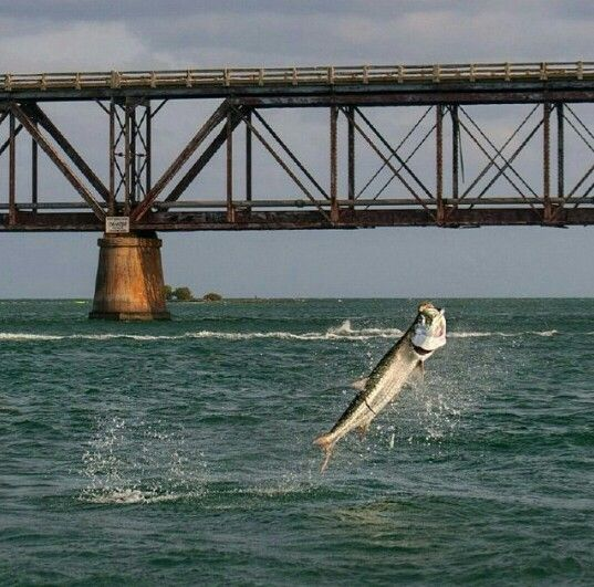 32 best images about Flats Fishing on Pinterest  Small fishing boats The surf and Bahia