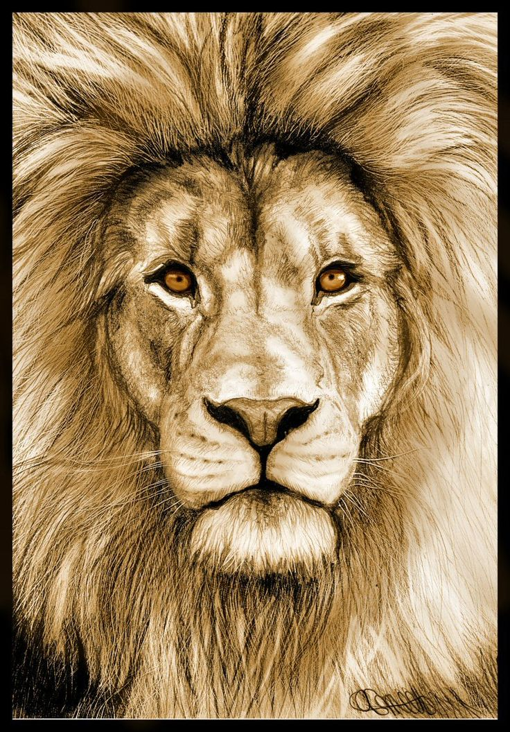 Lion Drawing Color : drawing, color, Colored, Pencil, Realistic, Drawing, Pencildrawing2019