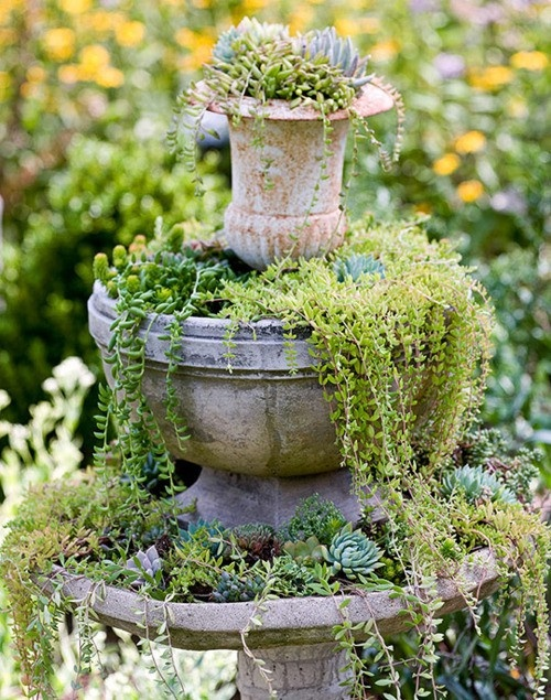 waterfall planter of succulents