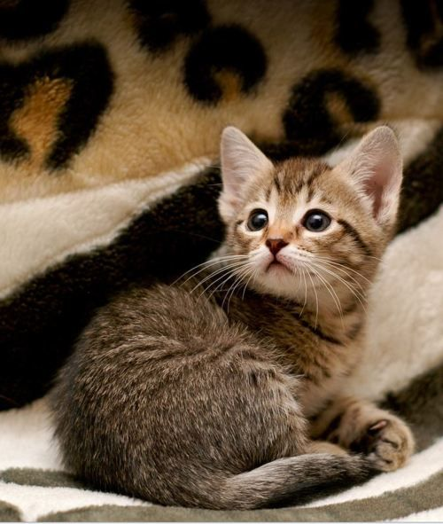 9783 Best Images About Kittens On Pinterest White