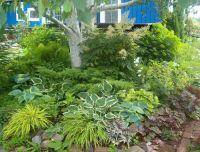 Planting under trees can be beautiful and varied. Hostas ...