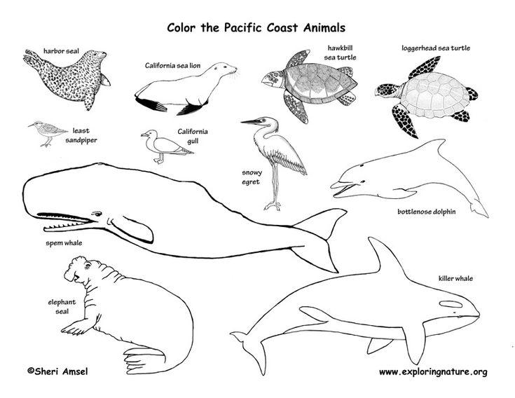 1000+ ideas about Arctic Tundra Animals on Pinterest