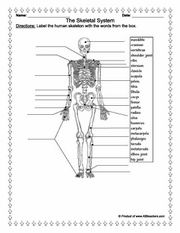 Human anatomy, Worksheets and Anatomy on Pinterest