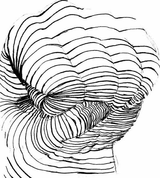 51 best images about cross contour drawing on Pinterest