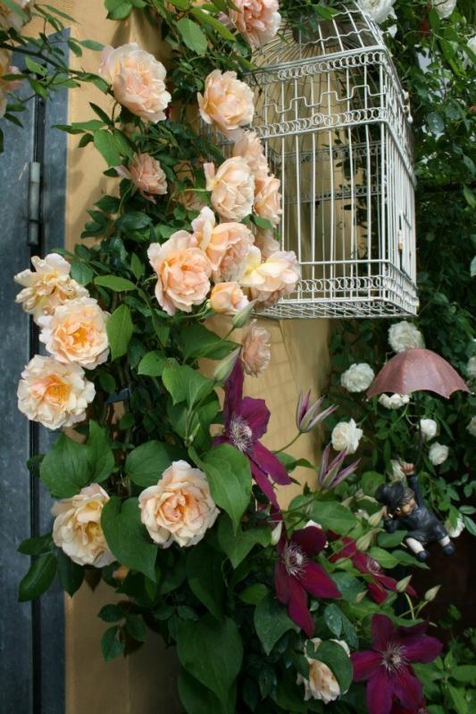 98 beste afbeeldingen over mooie rozen op Pinterest