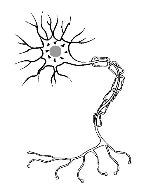 Neuron Coloring Picture Google Image Result for http