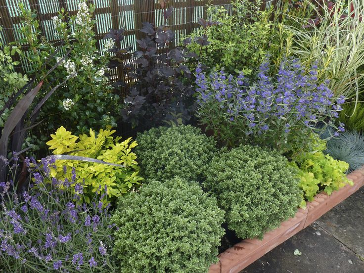 25 Best Ideas About Landscaping Shrubs On Pinterest Plants For